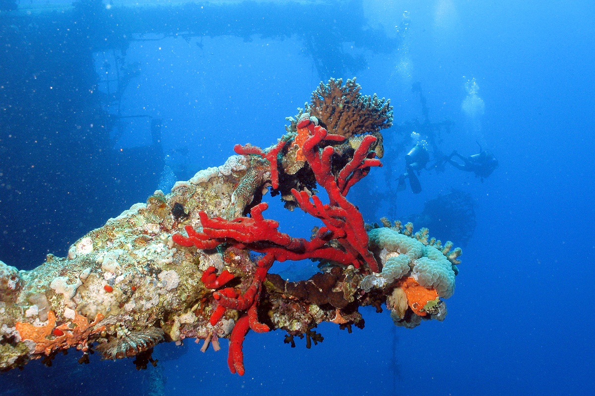 Aqaba Wracktauchen Cedar Pride - Najada diving