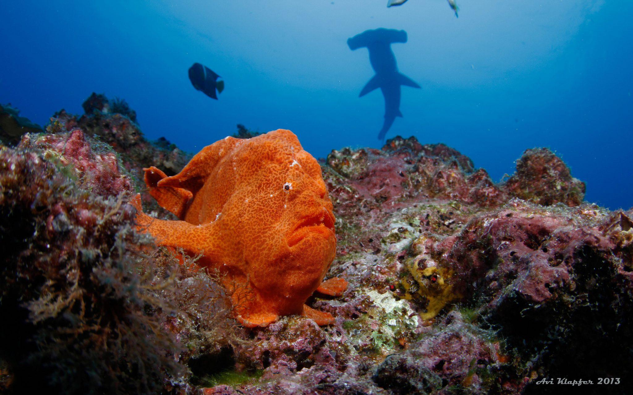 Undersea Hunter Group 2156 - Underseahunter Group