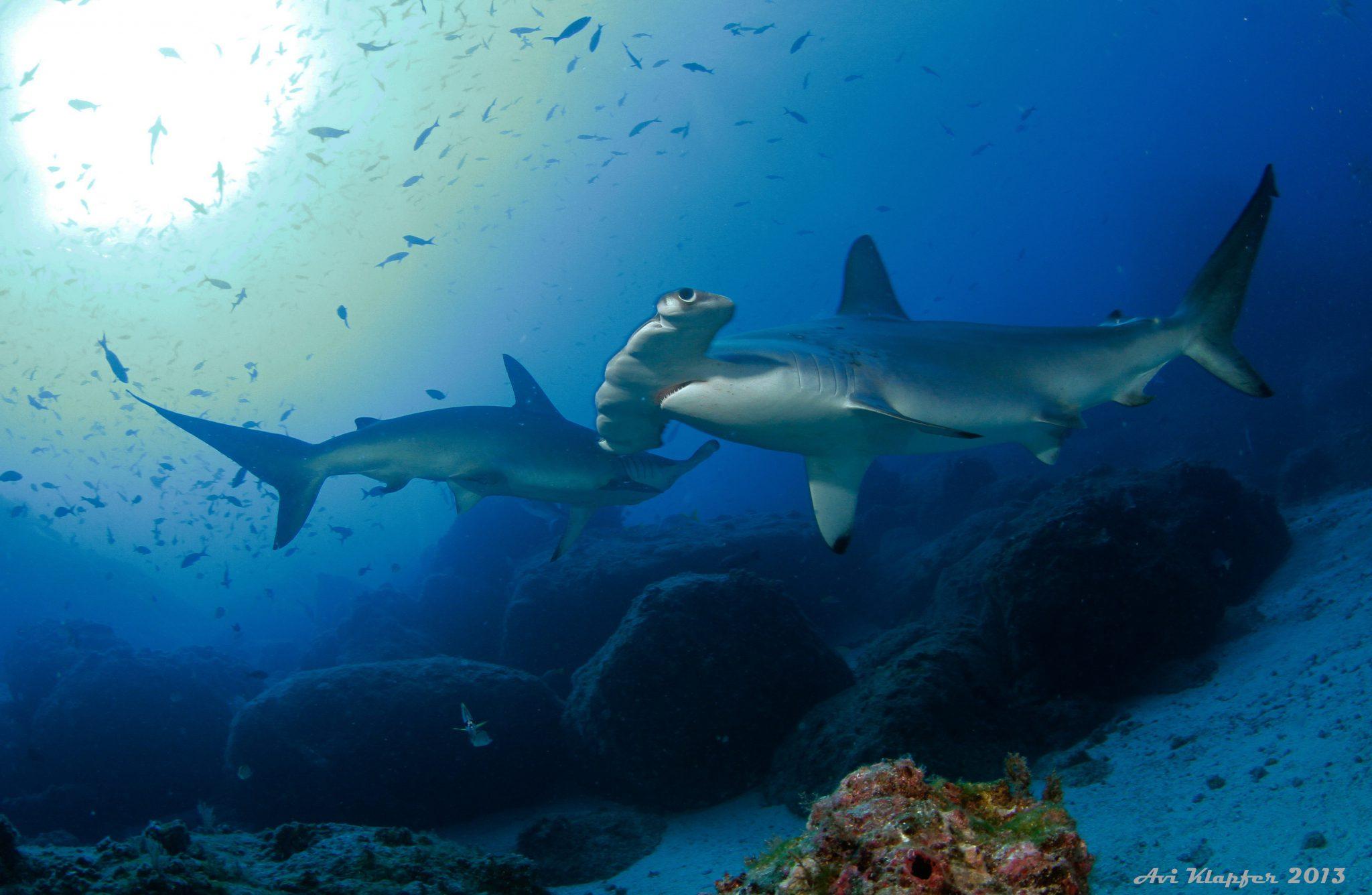 Undersea Hunter Group 2154 - Underseahunter Group